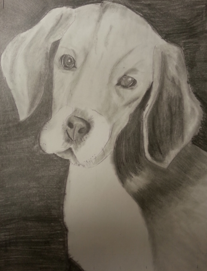 image: pencil drawing of Beagle with value